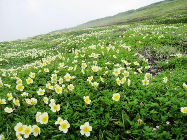 大きな花畑.JPG