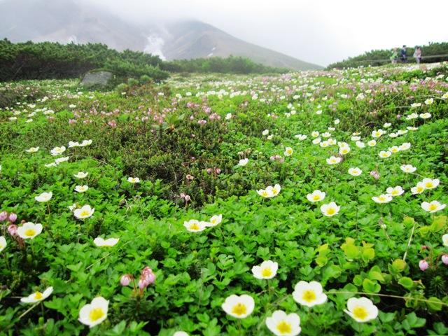 旭岳とお花畑.JPG