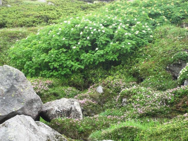 白雲岳裾野の庭園.JPG