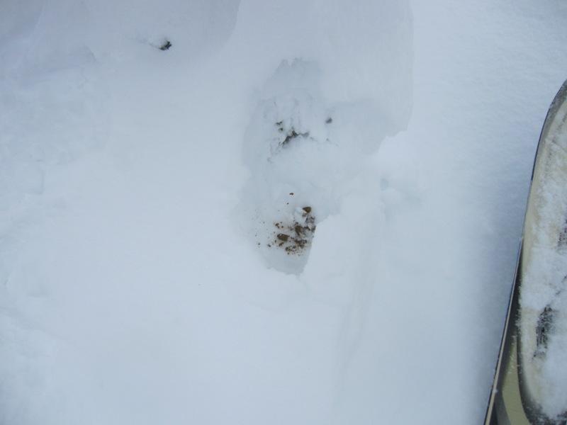 IMG_6120 ライチョウの雪穴.jpg